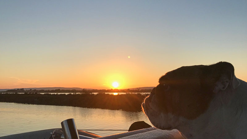 Lisbeth genießt die Abendsonne