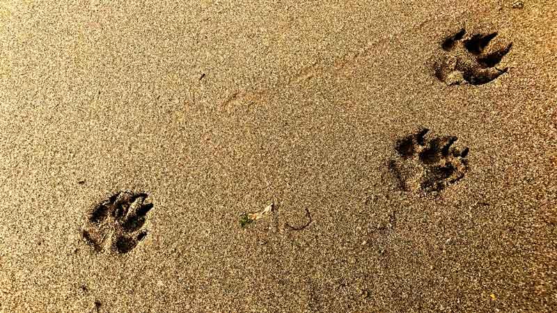 Bulldogspuren im Sand