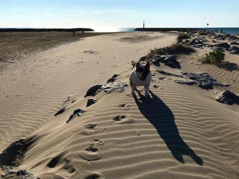 Lange haben wir nach dem perfekten Bulldog Beach gesucht - hier ist er