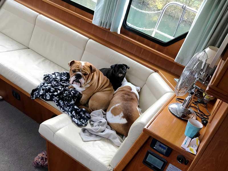 Während der Fahrt wird es im Schiff ziemlich kühl, deswegen suchen die Hunde Körperkontakt untereinander