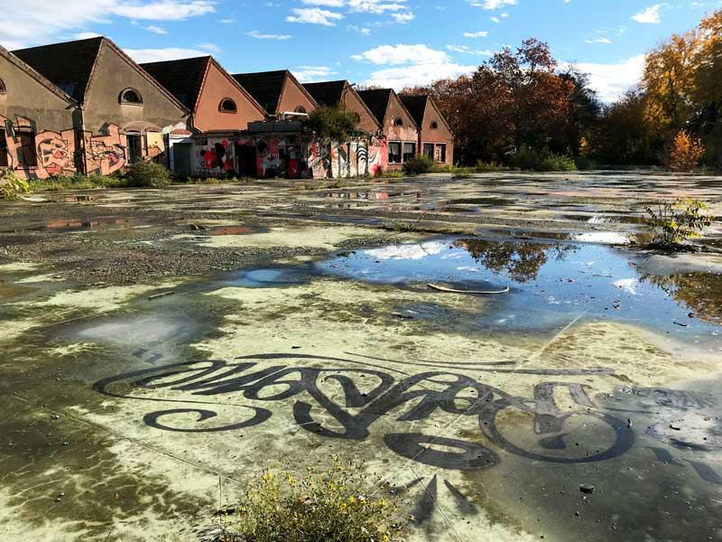 Vermutlich ein alter Sportplatz auf dem DMC Areal, der völlig überwuchert ist