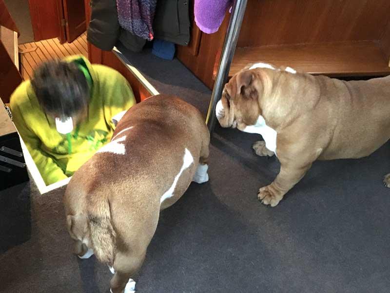 Die Bulldoggen interessieren sich ebenfalls für unsere technischen Probleme