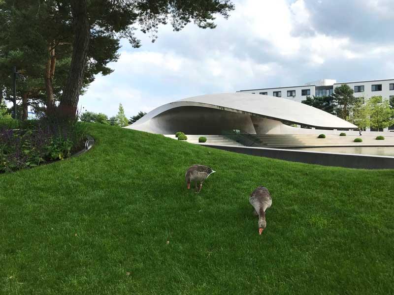 Der Porsche Pavillon in der Autostadt von VW Wolfsburg hat ein dynamisch geschwungenes, freischwebendes Dach. Im Vordergrund zwei grasende Gänse im Gras