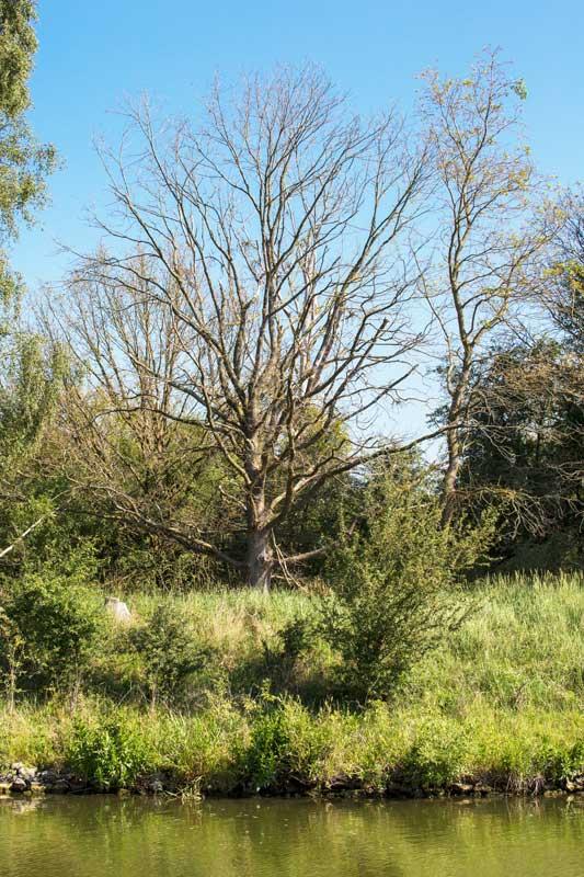 Großes Giebelmoor in Niedersachsen: In der offenkundig sehr sumpfigen Landschaft stehen viele tote Bäume entlang des Mittellandkanals