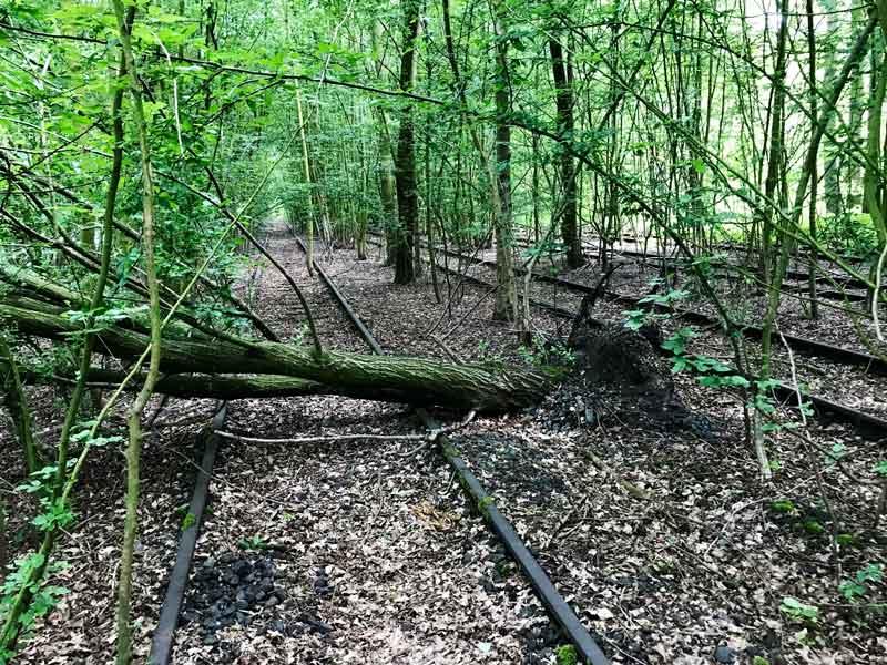 In Hiltrup bei Münster sind die alten Gleisanlagen völlig vom Wald überwuchert