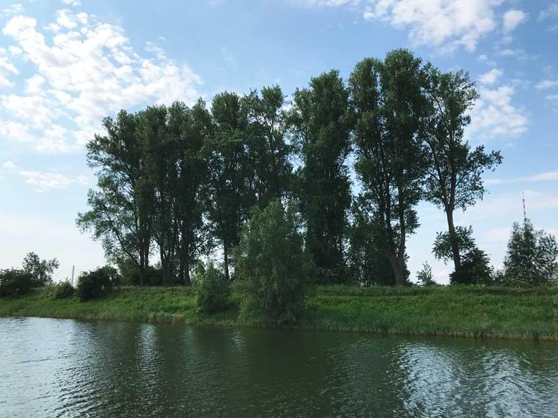 Obwohl die Pappeln auf dem Damm zum Rhein in der Nacht während des Sturm so bedrohlich gerauscht haben, sehen sie am nächsten Morgen völlig frisch und unversehrt aus