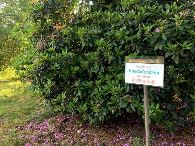 """Vor einem Rhododendron im Freizeitpark Flaesheim steht ein Schild mit der Aufschrift """"Das ist ein Rhododendron und keine Müllhalde!!!"""""""