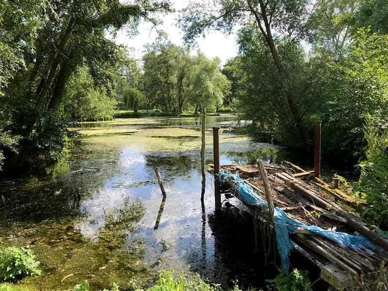 Blick übers Wasser in der Kliemsiedlung in Ketzin Havel; alles ist zugewuchert mit Weiden und Wasserpflanzen, vorne ein maroder Steg