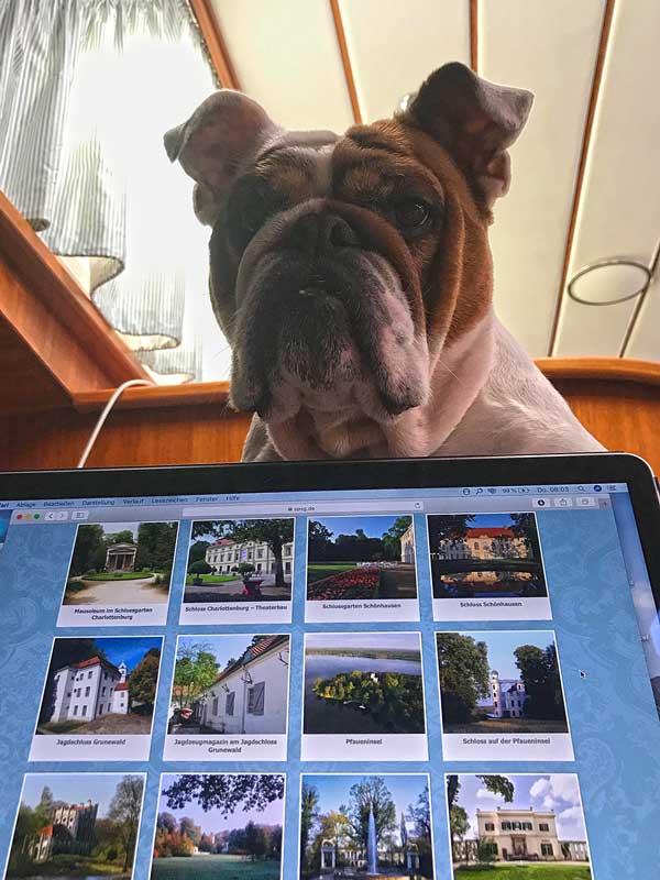 Bulldogge Lisbeth guckt von oben über Thomas Laptop, auf dem er sich gerade seine Ausflugsziele zusammenstellt