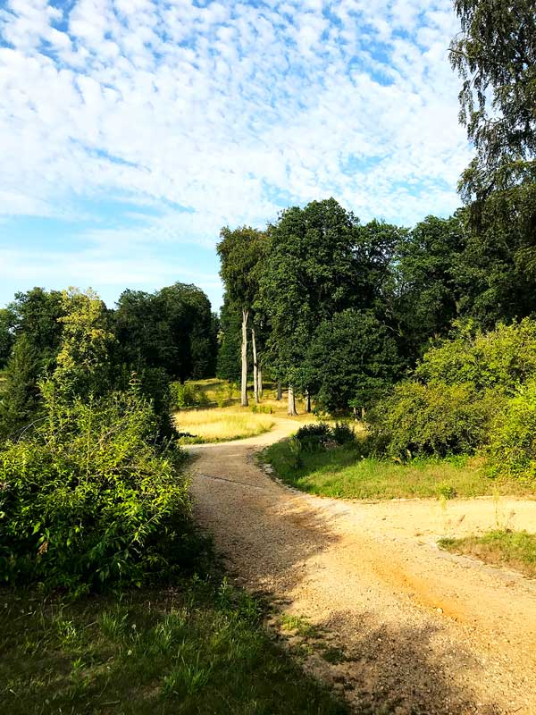 Kiesweg mit großen Buchen schlängelt sich durch den Park Babelsberg in Potsdam am Tiefen See