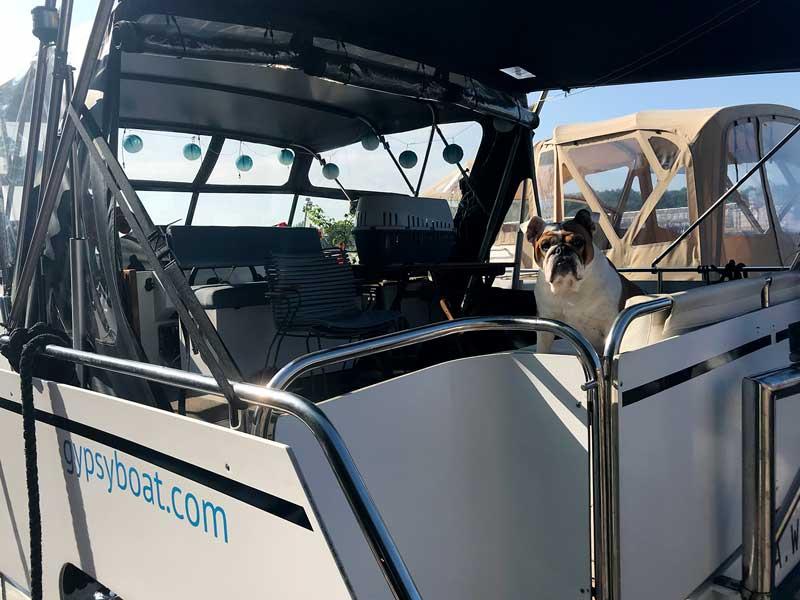 Die englische Bulldogge sitzt auf dem Boot und schaut wachsam in der Marina Rummelsburg in Berlin