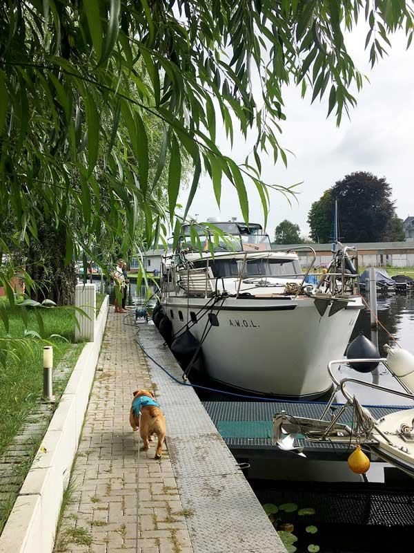 Die Motoryacht liegt am Quai im Yachthafen Schmöckwitz, Berlin, unter einer Weide, deren Äste fast bis zum Boden hängen. Die englische Bulldogge läuft aufs Boot zu.