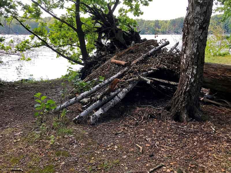 Am Ufer des Schmöldesees in Brandenburg südlich von Berlin ist ein Wetterschutz aus Birkenstämmen und Zweigen errichtet