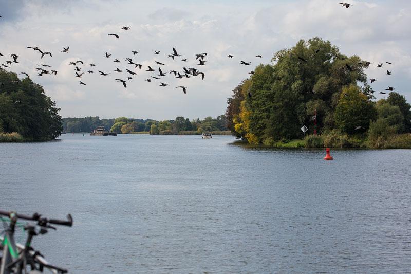 auf der Havel in Brandeburg, vor uns ein Sportboot und ein Frachtschiff. Ein Schwarm Gänse quert unseren Weg.